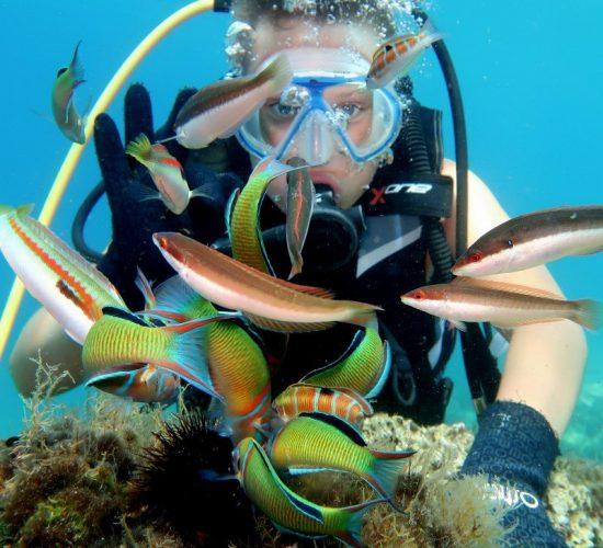 epidaurum-diving-fishes